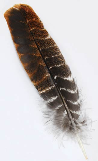 Turkey Wing Feather Short