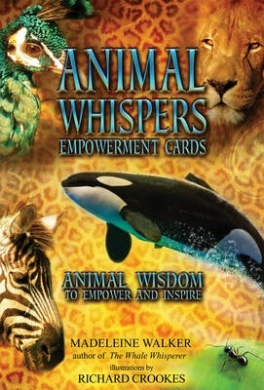 Animal Whispers Empowerment Cards By Madeleine Walker